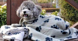 Paw Fleece Fabric Dog Blanket